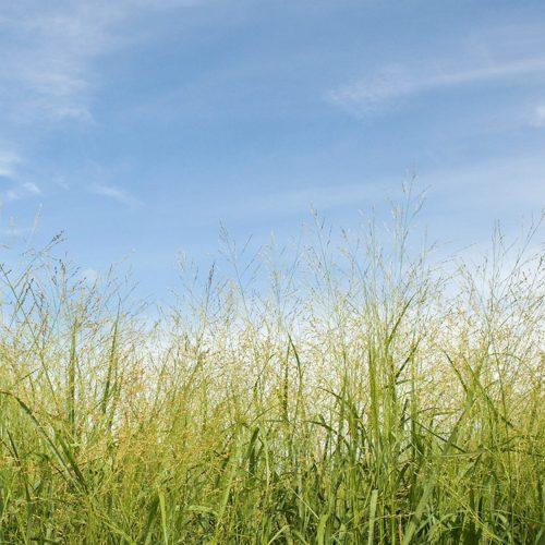 Meadow Restoration Project