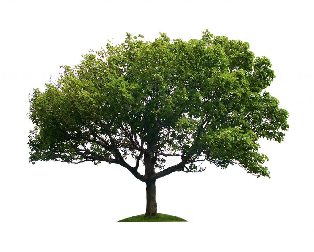 L_Tree